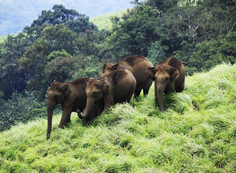 wayanad-wildlife-sanctuary