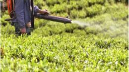 Green Pest Management