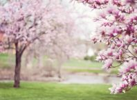 Spring Cleaning Security Tips