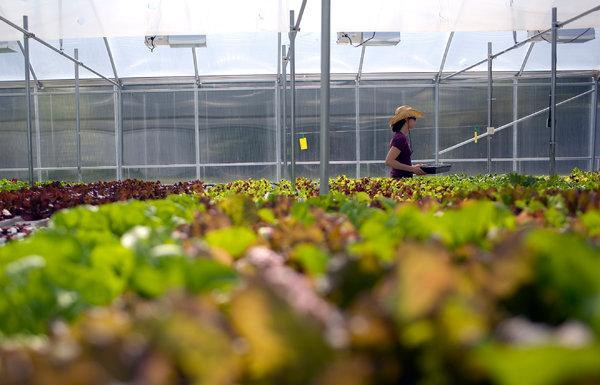 Are Greenhouse Crops Really Organic