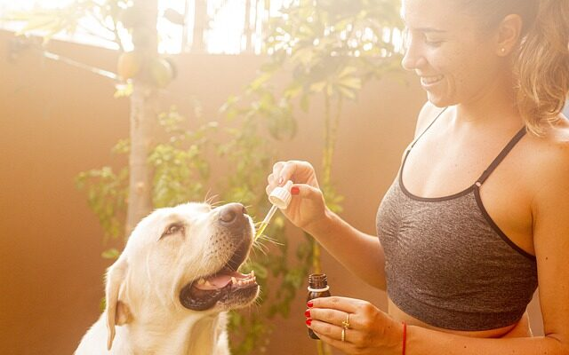CBD Oil Products For Pets Work