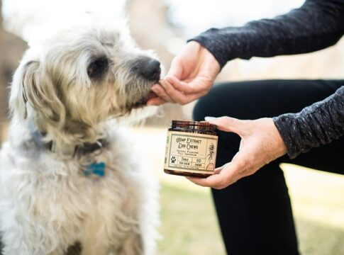 Different Kinds of CBD Dog Treats