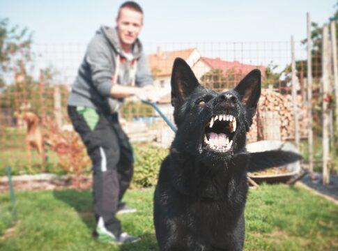 dog bite lawsuit